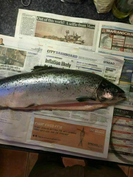 6+ Salmon 087